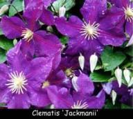 flores-de-bach-formulas-combinadas